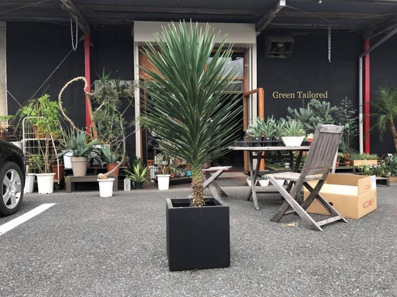 【 Green Tailored 】植物と雑貨(群馬県館林市)