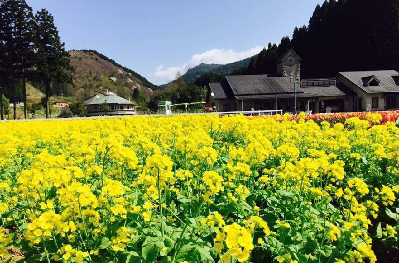子供と遊びながら自然の中で動物と遊べる...兵庫県神崎郡神河町猪篠の「神崎農村公園ヨーデルの森」