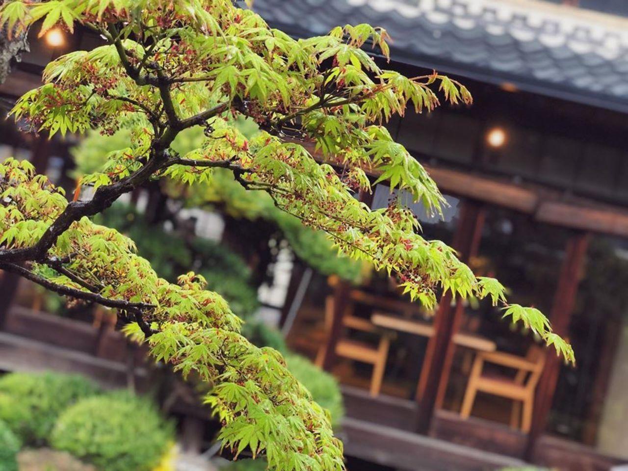 奈良県香芝市のココチキッチン奈良狐井より1枚の写真。。