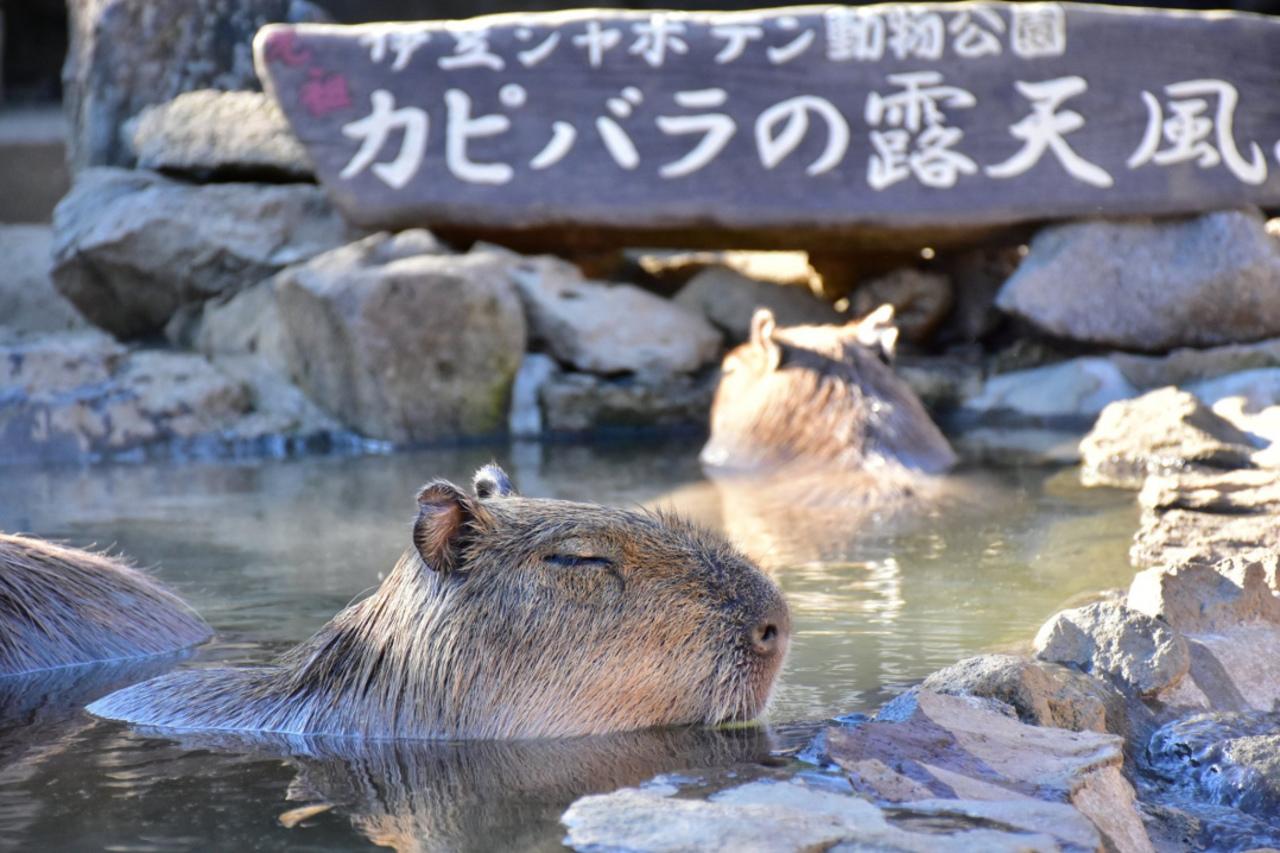 1500種類のサボテンや動物たちとのふれあい...静岡県伊東市富戸の「伊豆シャボテン動物公園」