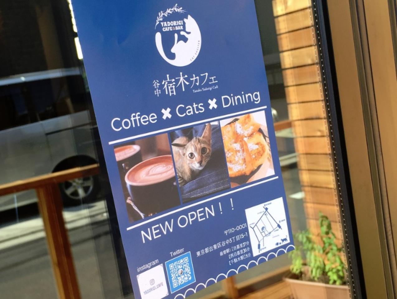 保護猫と過ごすシェルター併設カフェ...台東区谷中に『宿木カフェ」プレオープン。