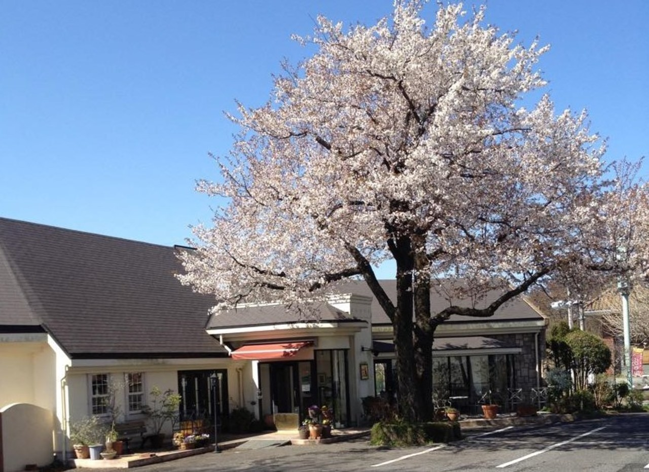 Cafeでありながら上質な料理を。。。茨城県守谷市百合ケ丘2丁目の『カフェドラパン』