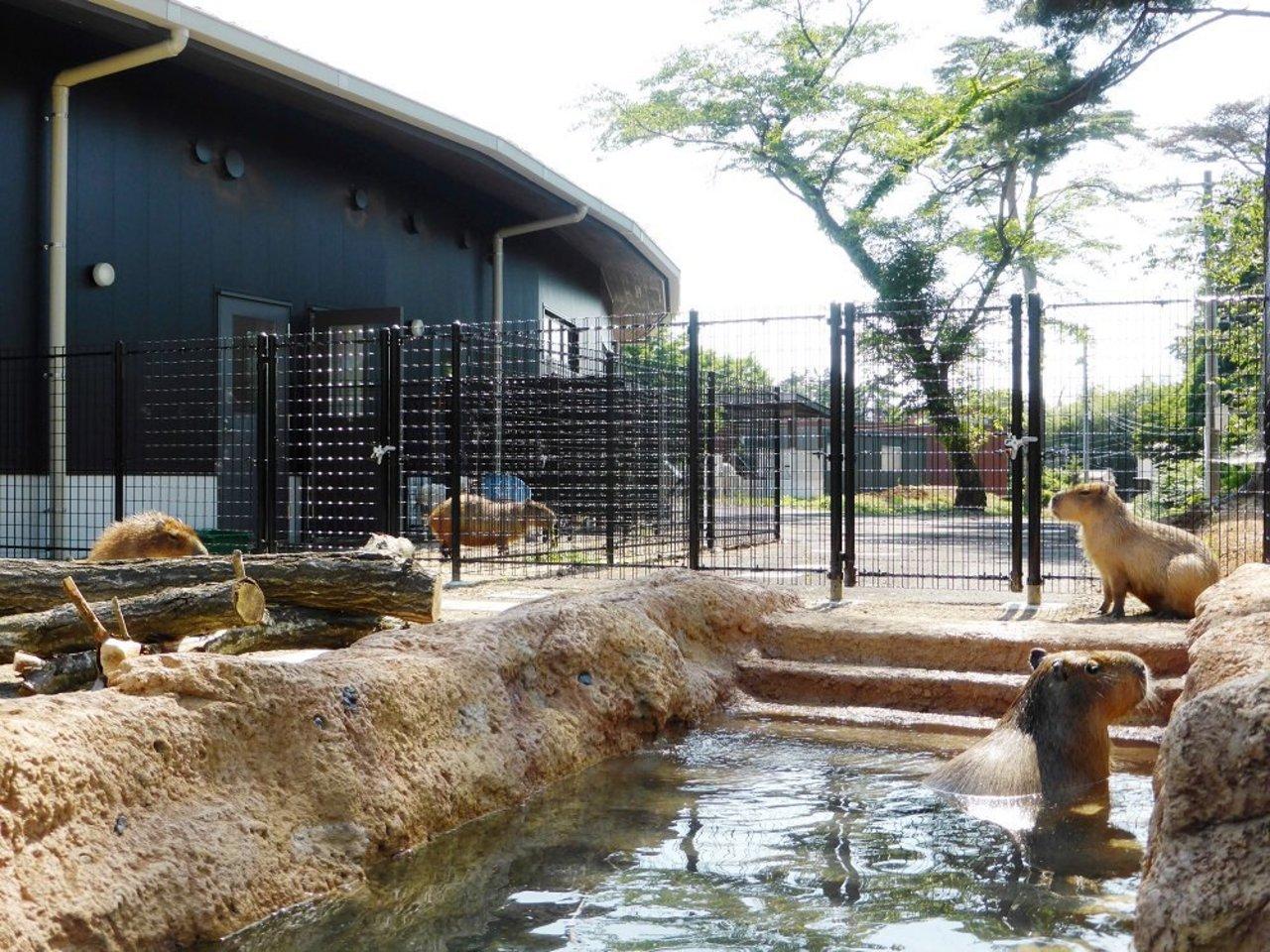 八木山ベニーランド向かいの動物公園...宮城県仙台市太白区八木山本町の「仙台市八木山動物公園」