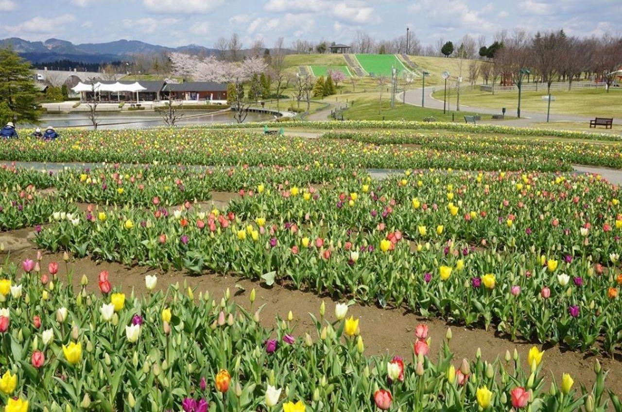 北陸地方唯一の国営公園...新潟県長岡市宮本東方町字三ツ又の「国営越後丘陵公園」