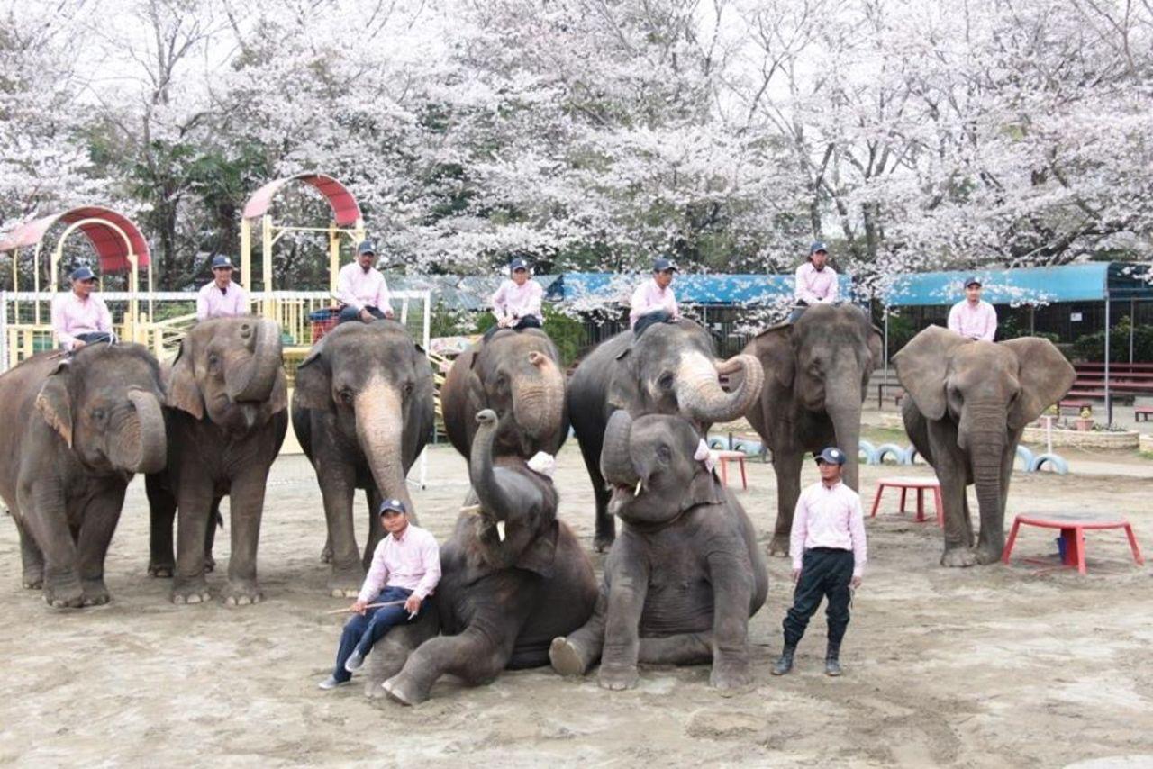 ゆめが叶う動物園...千葉県市原市山小川の「市原ぞうの国」