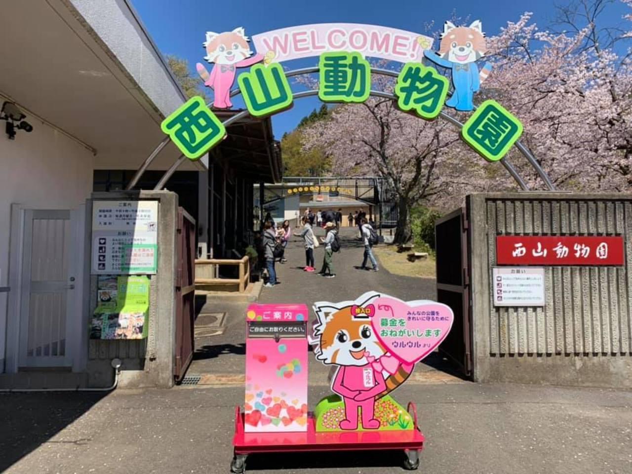 レッサーパンダ沢山の日本一小さな動物園...福井県鯖江市桜町の「鯖江市西山動物園」