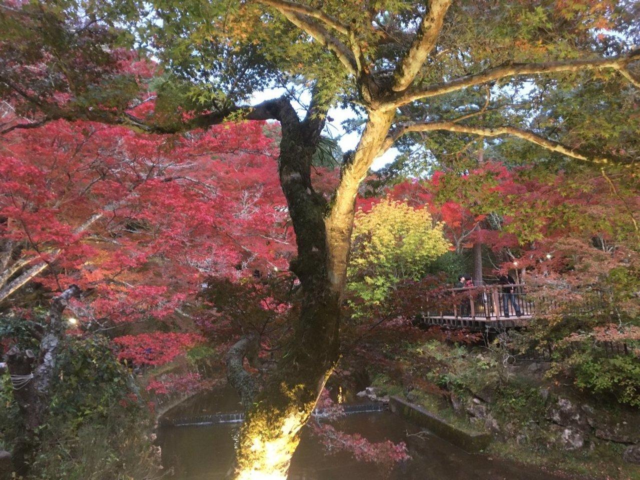 愛知高原国定公園...愛知県瀬戸市岩屋町の「岩屋堂公園」
