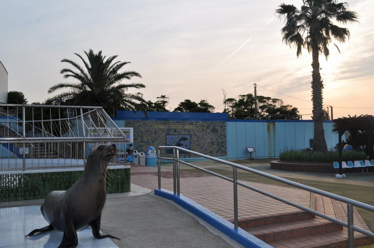 ふれあいと体験の水族館...愛知県知多郡美浜町奥田の「南知多ビーチランド」
