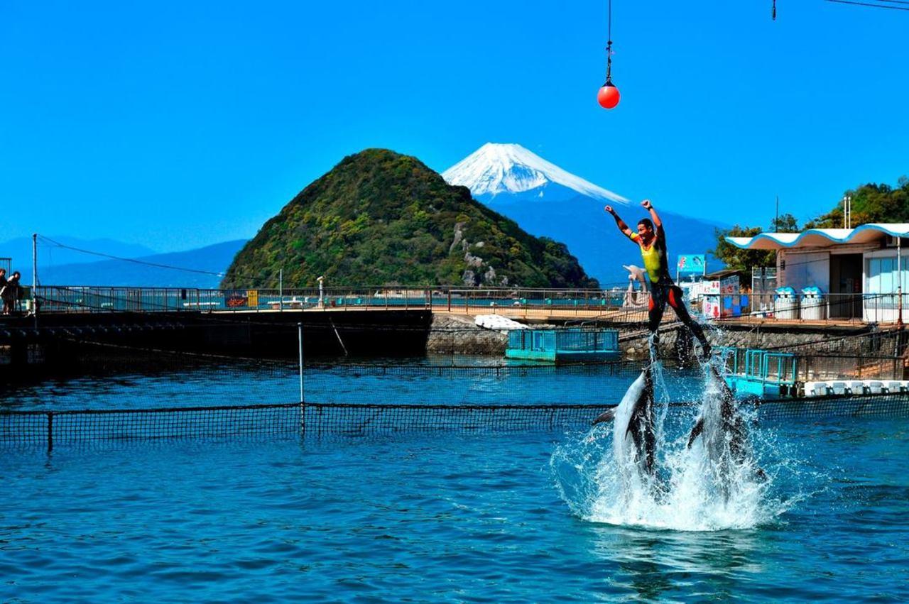 日本で2番目に歴史の長い水族館...静岡県沼津市内浦長浜の「伊豆・三津シーパラダイス」