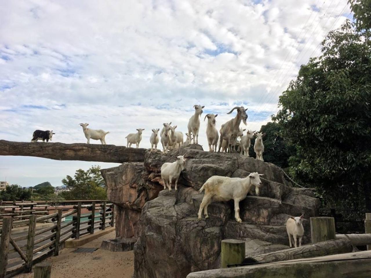 自然や動物とのふれあいを通して学習...北九州市小倉北区上到津の「到津の森公園」