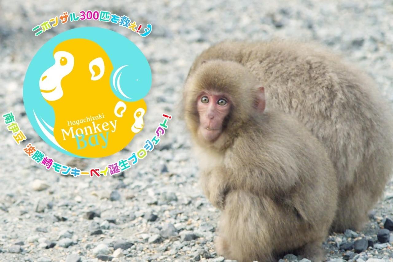 静岡県賀茂郡南伊豆町伊浜に野生のニホンザルとふれあえる「波勝崎モンキーベイ」5月7日オープン!