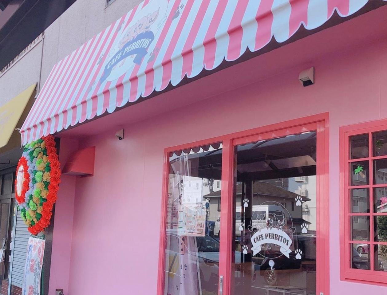 タピオカを中心に流行りのものを...徳島市かちどき橋2丁目にカフェ「ペリートス」オープン