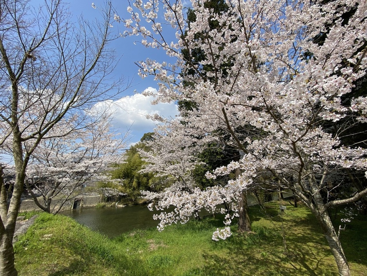 名張市の夏見橋付近より街フォト。。