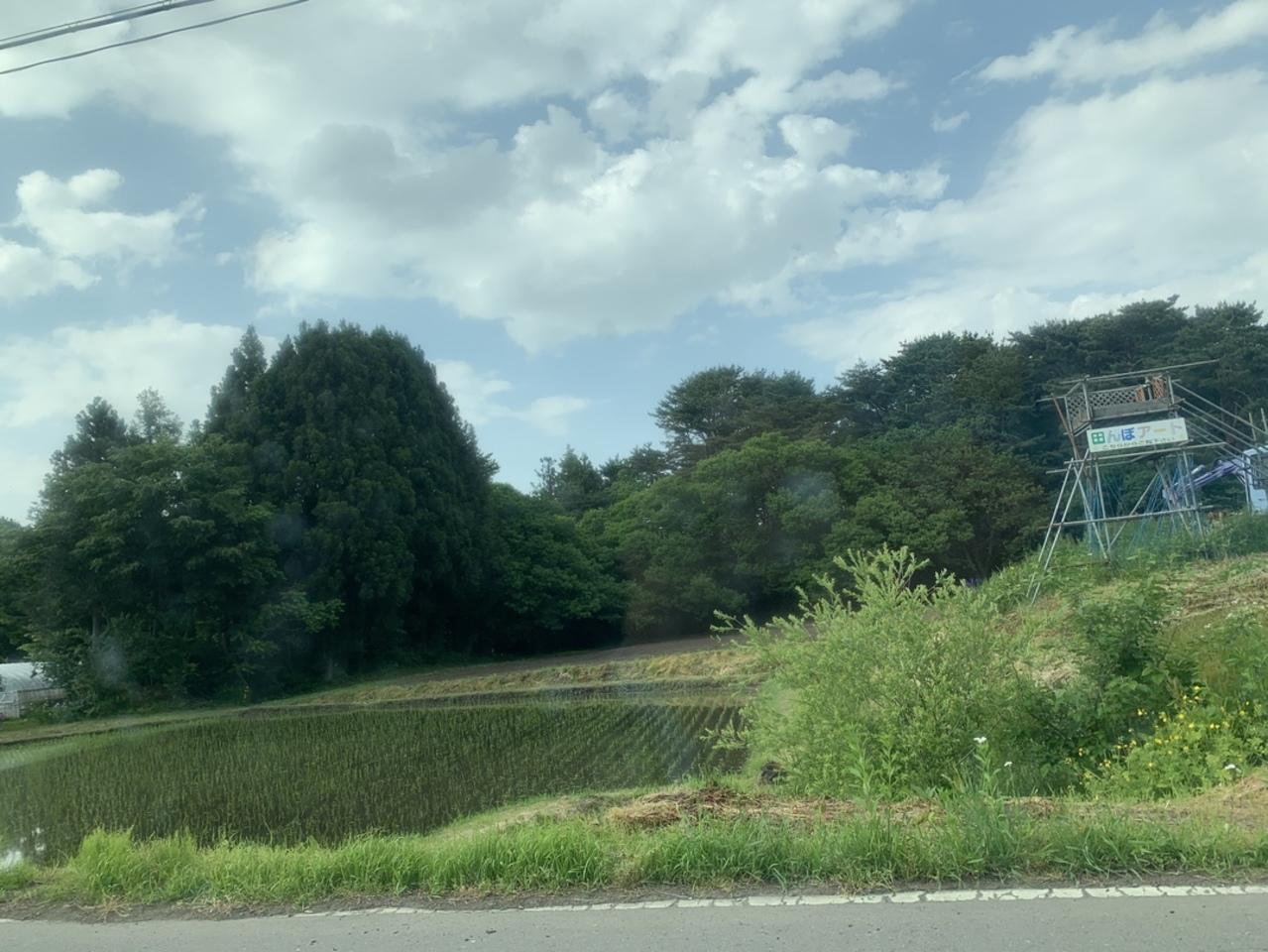 青森県三戸郡階上町 「階上町田んぼアート」 2020年は中止するそうです。