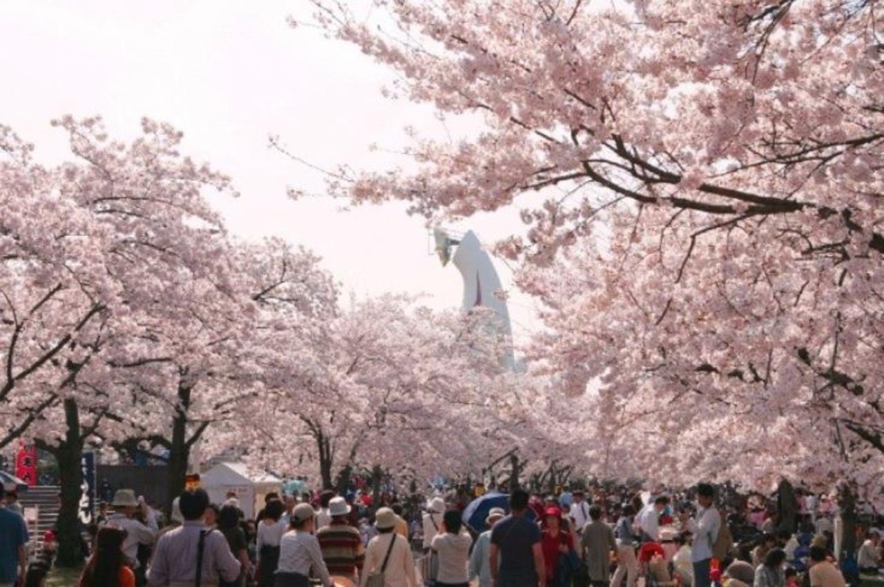 万博記念公園 桜まつり
