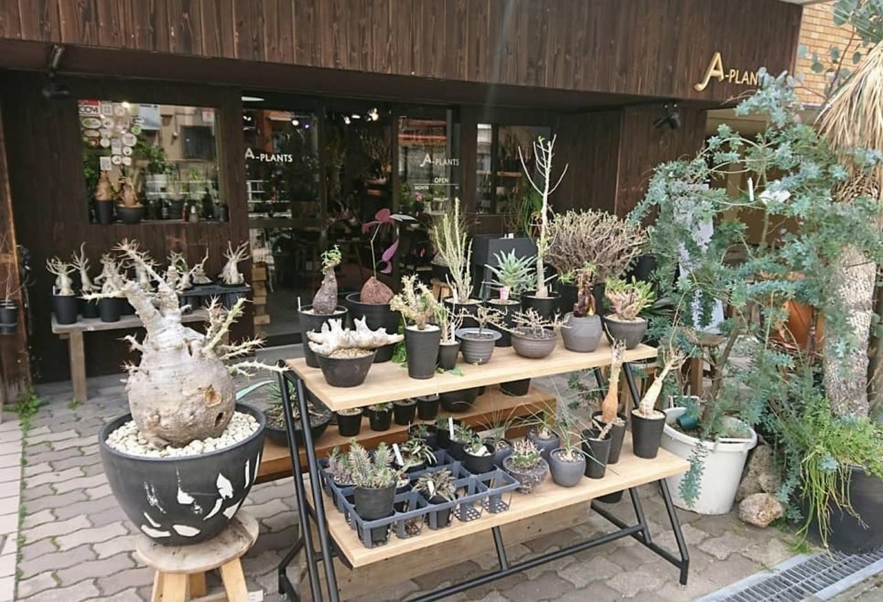 【 エープランツ 】観葉植物販売(大阪市鶴見区)