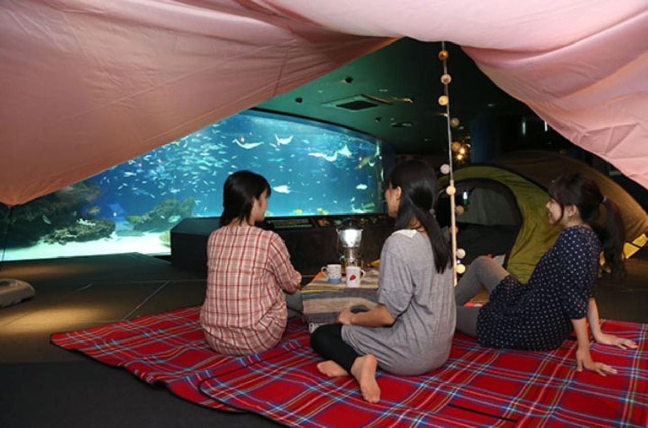 オトナ女子の夜ふかし水族館