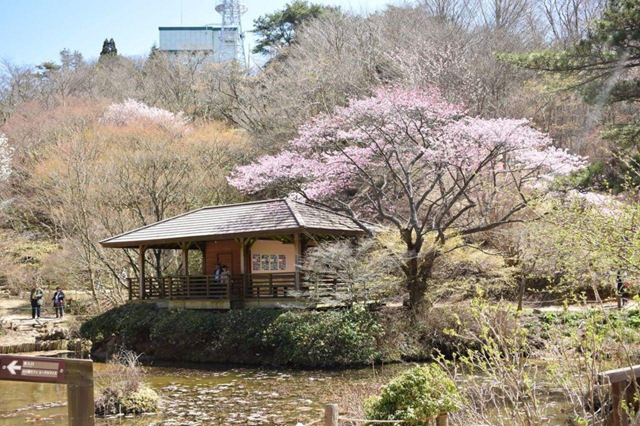 六甲山の山頂付近の植物園...兵庫県神戸市灘区六甲山町の「六甲高山植物園」