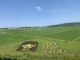 【青森県十和田市】「六日町 田んぼアート」 2021年の作品は??