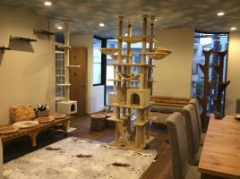 27114猫カフェ 森のねこ舎