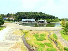 四季折々の動植物が楽しめる...千葉県松戸市千駄堀の「21世紀の森と広場」