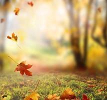 10月に入り、すっかり秋になりましたね!