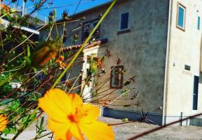 寄り添い佇む一軒家カフェ...鹿児島市山田町の『カフェ パルピト』