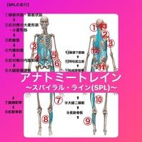 腰痛とスパイラル•ライン(SPL)