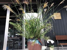 器を使用出来るスタイルのカフェ。。仙台市青葉区台原6丁目の『サトミキルン』
