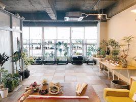 【 AYANAS 】観葉植物のセレクトショップ(群馬県高崎市)