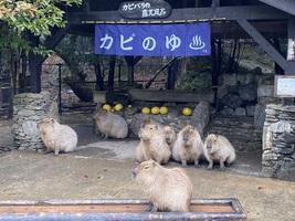 【長崎バイオパーク】コロナ禍の臨時休園で大打撃。のびのび過ごす動物たちを守りたい