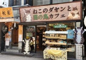 祝!3/16open『ねこのダヤンと猫の島カフェ』猫カフェ(神奈川県鎌倉市)