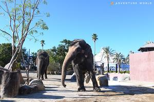 和歌山のアドベンチャーワールドにアジアゾウがのんびりと暮らすエリア「ゾウの森」が12/1オープン