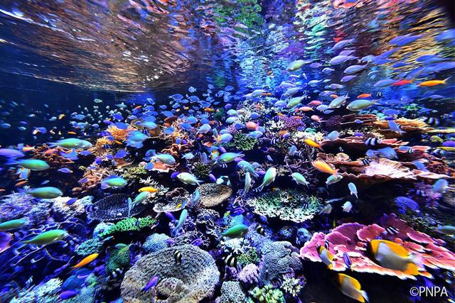 """<p>「名古屋港水族館」</p> <p>世界の海に暮らすさまざまな生き物たちの生態や進化を知ることができる水族館。</p> <p>多種多様な生物の飼育展示やイルカパフォーマンスを始めとしたイベント、</p> <p>日ごろの研究成果から生命の神秘やその躍動を全身で学び、体感...</p> <p>http://bit.ly/2ksmazq</p><div class=""""news_area is_type01""""><div class=""""thumnail""""><a href=""""http://bit.ly/2ksmazq""""><div class=""""image""""><img src=""""https://scontent-nrt1-1.cdninstagram.com/vp/99b7cfe062d26aa4eb2db8c2c263bb9e/5E160D5A/t51.2885-15/fr/e15/s1080x1080/70444601_126048188719481_1323416621013519258_n.jpg?_nc_ht=scontent-nrt1-1.cdninstagram.com&_nc_cat=105""""></div><div class=""""text""""><h3 class=""""sitetitle"""">名古屋港水族館 公式 on Instagram: """"おむすび型にぽっかりと マイワシのトルネードでシイラがマイワシの群れを通り抜けます。  9月中、名古屋港水族館、名古屋海洋博物館、名古屋港ポートビル、南極観測船ふじ、ポートハウス、JETTY(ジェティ)は月曜日も休まず営業します。  #名古屋港水族館 #名古屋港水族馆…""""</h3><p class=""""description"""">1,570 Likes, 2 Comments - 名古屋港水族館 公式 (@port_of_nagoya_public_aquarium) on Instagram: """"おむすび型にぽっかりと マイワシのトルネードでシイラがマイワシの群れを通り抜けます。…""""</p></div></a></div></div> ()"""