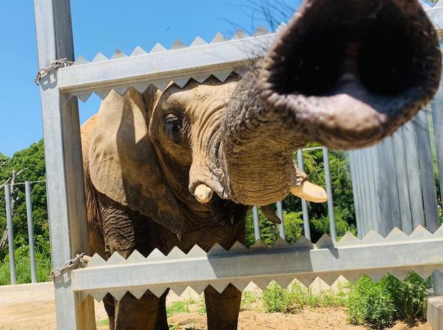 "<p>「しろとり動物園」</p> <p>どこの動物園よりも人と動物との距離が近く、</p> <p>なにより動物たちが自由にのびのび過ごす</p> <p>ここでしか味わえない触れ合いと感動が...</p> <p>http://bit.ly/2kuwFlM</p><div class=""news_area is_type01""><div class=""thumnail""><a href=""http://bit.ly/2kuwFlM""><div class=""image""><img src=""https://scontent-nrt1-1.cdninstagram.com/vp/009a1ce6cd30a589a115d7e9d0da5e84/5E086C69/t51.2885-15/e35/s1080x1080/68945206_1154942538049531_3920305097065238263_n.jpg?_nc_ht=scontent-nrt1-1.cdninstagram.com&_nc_cat=107""></div><div class=""text""><h3 class=""sitetitle"">白鳥どうぶつ園【公式】 on Instagram: ""RNC西日本放送さんに生中継していただきました! ナイトZOOも残り2回ご紹介していただきました^_^  #しろとり動物園 #白鳥動物園#RNC#西日本放送#西崎梨乃""</h3><p class=""description"">263 Likes, 0 Comments - 白鳥どうぶつ園【公式】 (@shirotorizoo) on Instagram: ""RNC西日本放送さんに生中継していただきました! ナイトZOOも残り2回ご紹介していただきました^_^  #しろとり動物園 #白鳥動物園#RNC#西日本放送#西崎梨乃""</p></div></a></div></div> ()"
