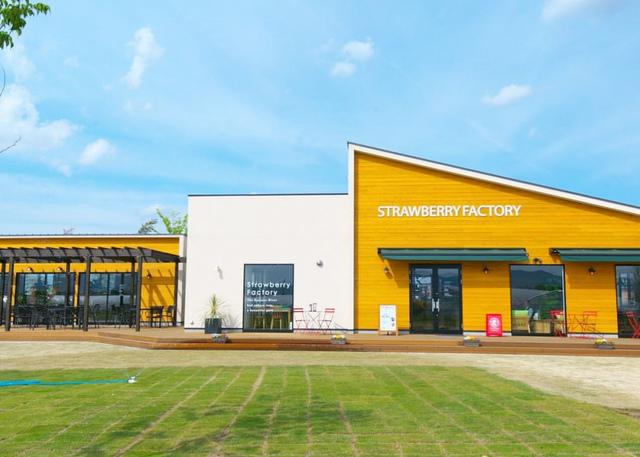 """<p>草津川跡地公園ai彩ひろば内</p> <p>「Strawberry Factory」</p> <p>草津の新ブランド苺""""蜂蜜いちご""""の直売をはじめ</p> <p>いちご狩りやカフェ、レンタル農園も併設...</p> <p>http://bit.ly/2JMe26E</p><div class=""""news_area is_type01""""><div class=""""thumnail""""><a href=""""http://bit.ly/2JMe26E""""><div class=""""image""""><img src=""""https://scontent-nrt1-1.cdninstagram.com/vp/f2303c7b22172efc3b6c4f1bae95a8f6/5DE7D313/t51.2885-15/e35/s1080x1080/61090476_458572321577393_1306911053071588922_n.jpg?_nc_ht=scontent-nrt1-1.cdninstagram.com""""></div><div class=""""text""""><h3 class=""""sitetitle"""">Strawberry Factory 滋賀 on Instagram: """"ストロベリーファクトリー???? カフェグランドオープン☺️✨ モーニングセットや自家製トーストサンド、オリジナルブレンドハーブティなどゆったりとした空間でお寛ぎ下さいませ☺️ そして、5月19日オープンのオーストラリアンスタイルのイタリアンPublic House…""""</h3><p class=""""description"""">326 Likes, 0 Comments - Strawberry Factory 滋賀 (@strawberry_factory932) on Instagram: """"ストロベリーファクトリー???? カフェグランドオープン☺️✨ モーニングセットや自家製トーストサンド、オリジナルブレンドハーブティなどゆったりとした空間でお寛ぎ下さいませ☺️…""""</p></div></a></div></div> ()"""