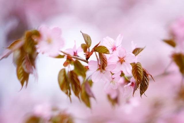"<p>10月に入っても毎日暑い日が続きますね。1日の寒暖差が大きいこの時期に要注意なのが「ギックリ腰」です!</p> <p></p> <p><a href=""https://mitaka-bodypreparation-sakura.com/blog/20191004-670/"">https://mitaka-bodypreparation-sakura.com/blog/20191004-670/</a></p><div class=""news_area is_type01""><div class=""thumnail""><a href=""https://mitaka-bodypreparation-sakura.com/blog/20191004-670/""><div class=""image""><img src=""https://prtree.jp/sv_image/w640h640/oR/Yi/oRYiLn5pLG5ywAdX.jpg""></div><div class=""text""><h3 class=""sitetitle"">三鷹の整体 ぎっくり腰は季節の変わり目が要注意! | 三鷹にある当整体院のブログはこちら</h3><p class=""description""></p></div></a></div></div> ()"