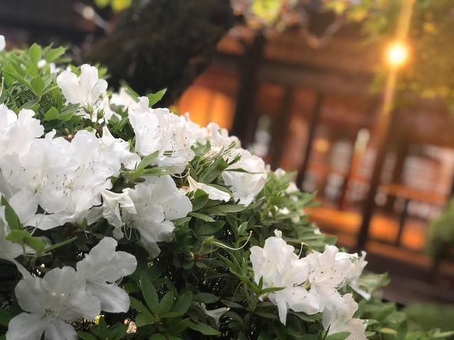 """<p>こんにちは、奈良県香芝市のココチキッチン奈良狐井です。<br /><br />本日の1枚の写真は、とても綺麗に咲いたツツジの花📷✨<br /><br />ピンク色も綺麗ですが白は上品な感じがしてとても好きです💐<br /><br />残念ながらもう散ってしまいましたがまた1年後のお楽しみです😊<br /><br />本日も、皆様のご来店を心よりお待ちしています😊<br /><br />🍝ランチご予約フォーム ☞ https://bit.ly/37LSktG <br />※ランチは11時~と13時~の二部制営業になります。<br />前々日(定休日除く)午前中迄のご予約でご利用下さい。<br />前々日(定休日除く)午後以降のご予約はお電話のみの受付になります。<br /><br />🍖ディナーご予約フォーム ☞ https://bit.ly/37LSktG<br />※ディナーは前々日(定休日除く)午前中迄にご予約願います。<br /><br /><strong>ココチキッチン奈良狐井</strong> 奈良県香芝市狐井613 1階 ・・・・<br />open:11:00-14:30 17:30-21:30 close:木曜.第三水曜日<br /><strong>tel:0745-44-8275</strong>※<strong>完全予約制<br /></strong>近鉄五位堂駅より徒歩10分 敷地内に20台以上駐車可<br /><a href=""""http://www.cocochi-kitchen.com/"""">HP</a><a href=""""https://www.instagram.com/cocochikitchen/"""">Instagram</a><a href=""""https://twitter.com/cocochikitchen"""">twitter</a><a href=""""https://www.facebook.com/cocochi.kitchen/"""">Facebook</a><a href=""""/cocochikitchen"""">PRtree</a><br />※2階<a href=""""/cocochizakka"""">cocochizakka</a>は10時から17時30分までの営業になります。</p> <p><br /><strong>cocochizakka</strong> 奈良県香芝市狐井613 2階 ・・・・<br />open:10:00-17:30 close:日曜.木曜.第三水曜日<br /><strong>tel:0745-44-8275</strong> mail:cocochizakka@gmail.com<br /><a href=""""https://cocochizakka.jimdofree.com/"""">HP</a><a href=""""https://www.instagram.com/cocochizakka/"""">Instagram</a><a href=""""https://www.facebook.com/cocochizakka613/"""">Facebook</a><a href=""""/cocochizakka"""">PRtree</a><br />※ココチ雑貨のみのご来店も大歓迎です。<br /><br /><a href=""""https://bit.ly/2VkdWrd"""">近鉄五位堂駅からの動画</a> <a href=""""https://bit.ly/2wBiy48"""">近鉄下田駅からの動画</a><br /><br />ココチキッチンメニュー ☞<a href=""""http://bit.ly/2Lub1cd"""" target=""""_blank"""">http://bit.ly/2Lub1cd</a></p> <div class=""""news_area is_type01""""> <div class=""""thumnail""""><a href=""""/cocochikitchen/menu/141.html""""> <div class=""""image""""><img src=""""/sv_image/w640h640/6I/5f/6I5fkMj0J2ZnRLyH.jpg"""" /></div> <div class=""""text""""> <h3 class=""""sitetitle"""">奈良県香芝市の古民家を改装したイタリアンを中心としたダイニング『ココチキッチン奈良狐井』</h3> <p class=""""description"""">懐かしくて落ち着く古民家で少しだけ贅沢なひとときをお過ごし下さい</p> </div> </a></div> </div> ()"""