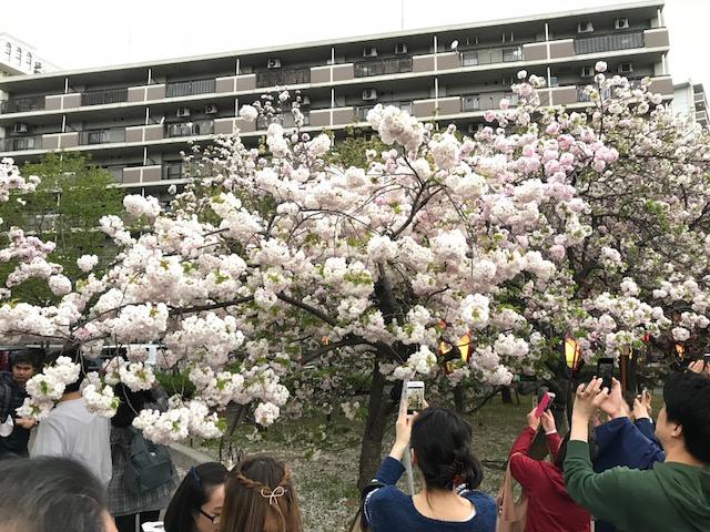 <p>大阪市北区の造幣局で4月11日より、大阪の春の風物詩「桜の通り抜け」が始まりました。</p> <p>約130種類約350本の桜が見ごろです。</p> <p>一般公開は4月17日までで公開時間は10:00~21:00(土日は9:00~)。</p> ()